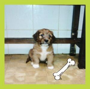 pup3macho