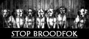broodfok